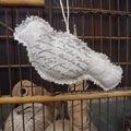 oiseau lin