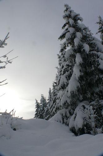 2008 12 17 Neige est sapins