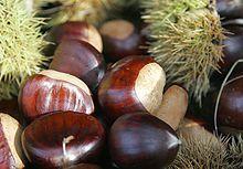 220px-Chestnut
