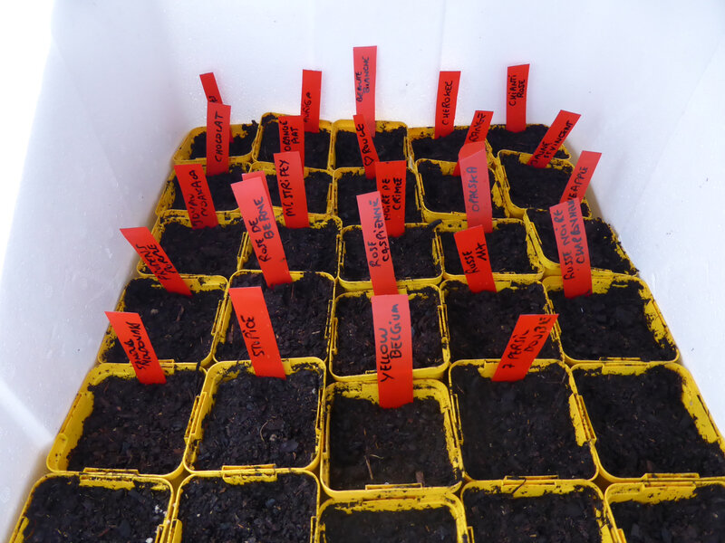 12-tomates- semis (1)