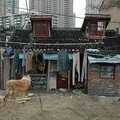 4 datong lu dog and house feb 06