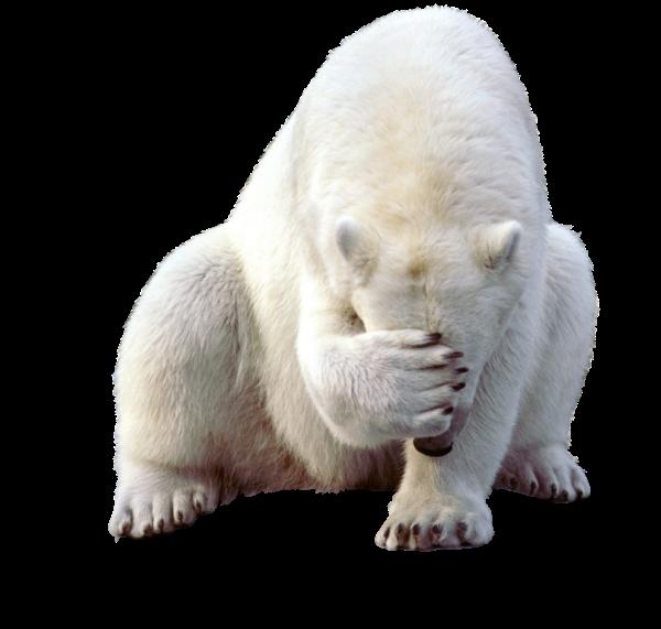 Bear384