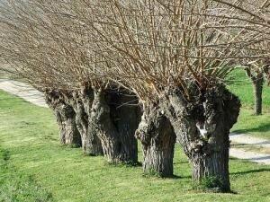 21 arbre