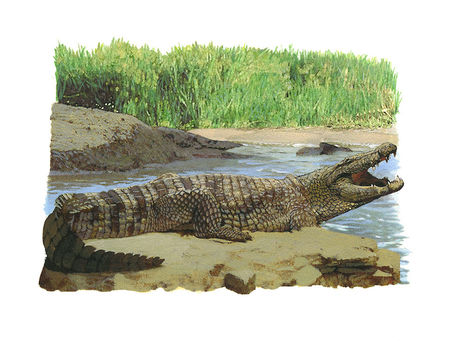 Crocodile___copie