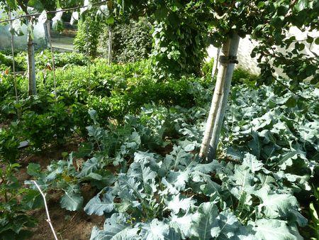 01-jardin (5)