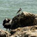 Oiseaux au bord du lac