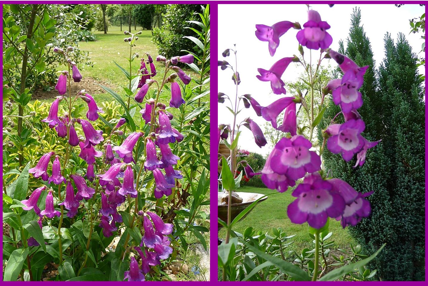 Jardin de campagne en juin les mallettes de mijane for Jardin aux fleurs