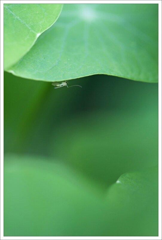 ville insecte capucines verdure 011114