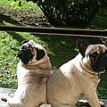 Doug et Guizmo