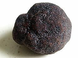 truffe_noire_du_P_rigord__Tuber_melanosporum__D