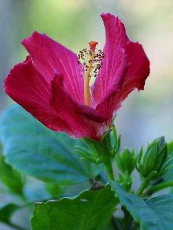 Macintosh_HD_Desktop_Folder_flower_5_bg_030604