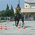 Jeux équestres manchots 2013 (219)
