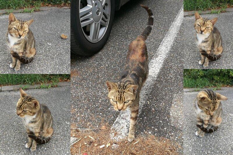2017-petit chat rue