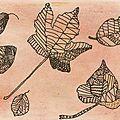 Feuilles d'automne par Aurore