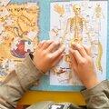 Corps humain : le squelette (2)