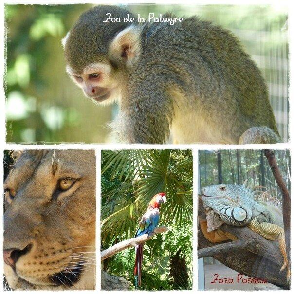 zoo de la palmyre 1