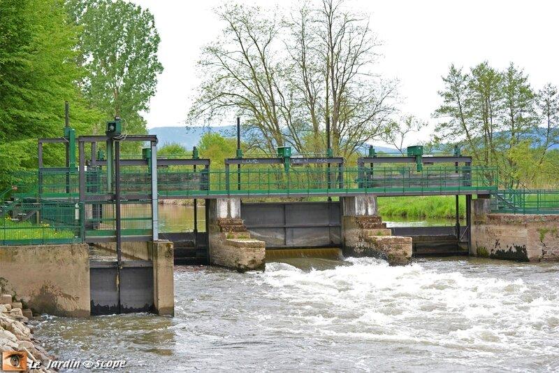 Le barrage sur l'Ill à Ehnwihr
