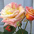 wallpaper_beautiful_roses_1801