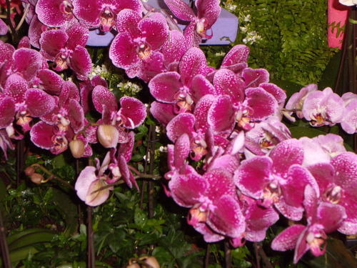 Floralies 100