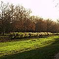 une rangée de roseaux