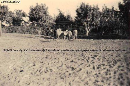 12_RCA_WATTENNE_moutons_et_cigogne