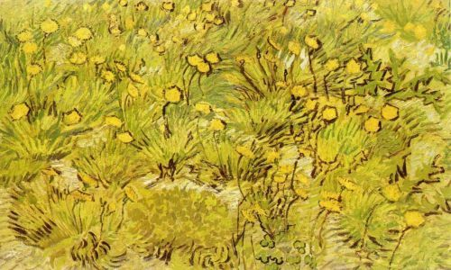 a-field-of-yellow-flowers