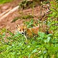 2014-05-30 LUX-1024