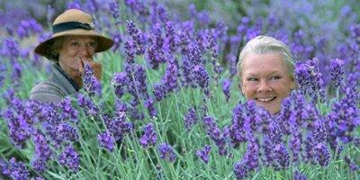 colours-lavender