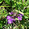 Petite flore du système d'Issaux et de la Pierre Saint Martin