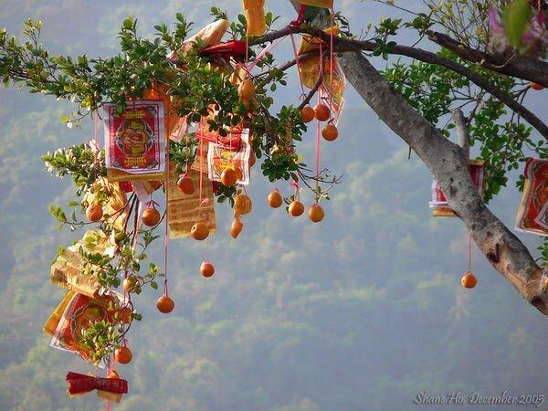 arbre___voeux_orange_chinois_JHK