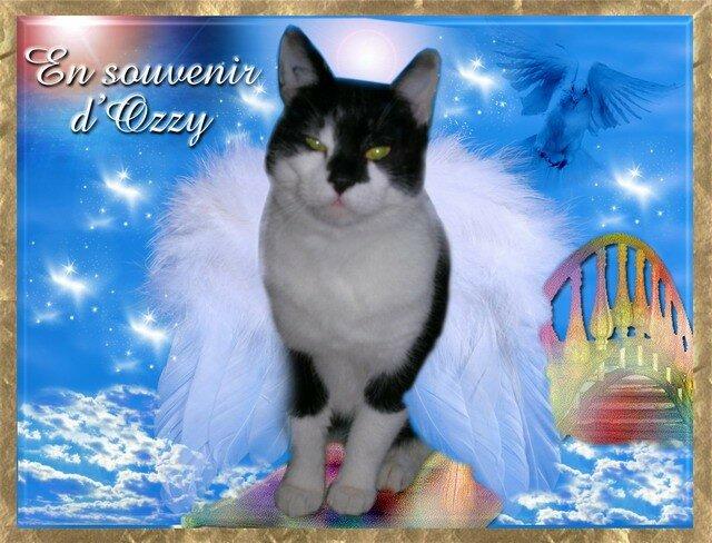 Ozzy sur le pont de l'arc en ciel