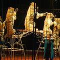 impresionantes los tigres