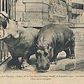 Histoires d'hippopotames sur france culture : de pessac à l'afrique du sud