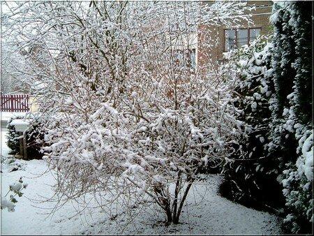 hiver2008b