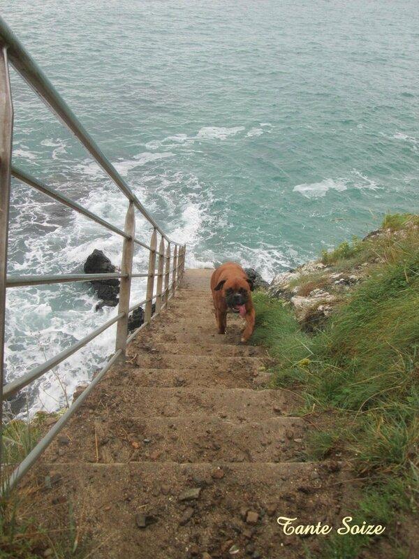 Gaufrette escalier