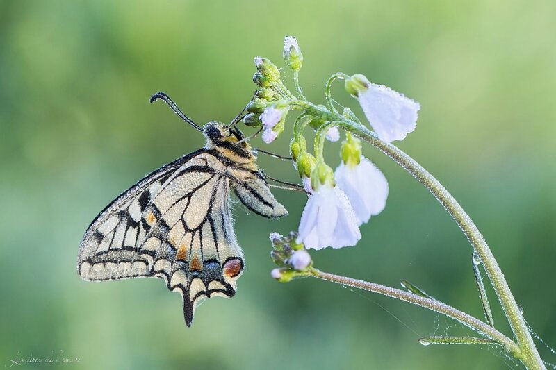 w_Machaon net_20170329_6895