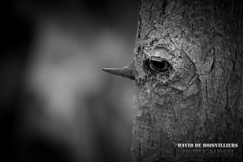 L'arbre menteur
