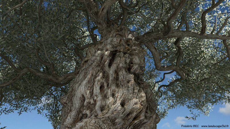 Olea europaea olive tree 3D tree plant model TPF The Plant Factory image 2