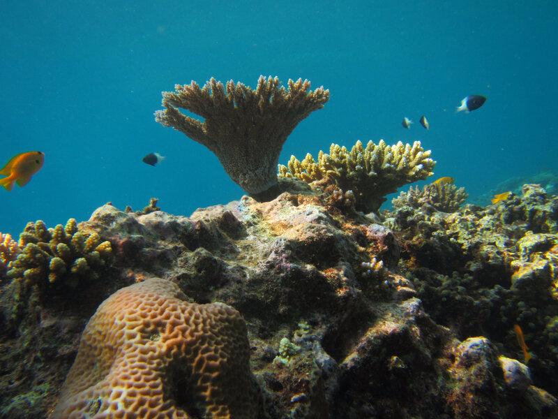 les coraux mahorais
