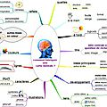 Neurosciences et cartes mentales