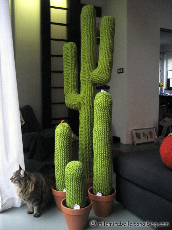 cactus geants salon maison deco