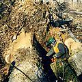 ve0028 Exploitation chênes déracinés suite à la tempête de 199