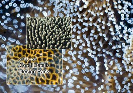 coral_details