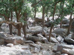 Fraîcheur de l'eau qui court DOGONS Mali