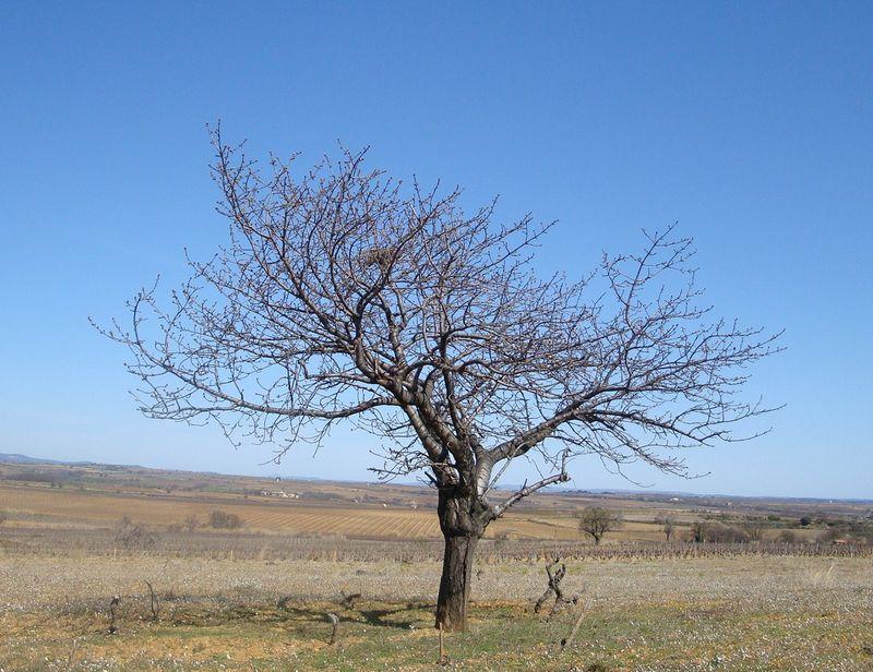 L 39 arbre souhaits des jours et des couleurs - L arbre a souhait ...