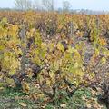 Vignobles du Beaujolais...