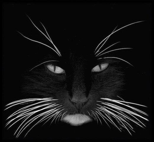la nuit tous les chats sont gris sauf moi