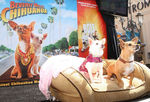 Disney_Bolt_Beverly_Hills_Chihuahua_DVD_Release_fLXu08Aehxtl