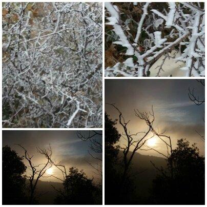 Brouillard givrant (11)