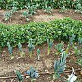poireaux et cacahuètes - www.passionpotager.canalblog.com
